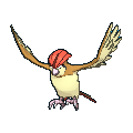 Pidgeotto Buddy Dystans