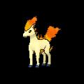 Ponyta Buddy Dystans